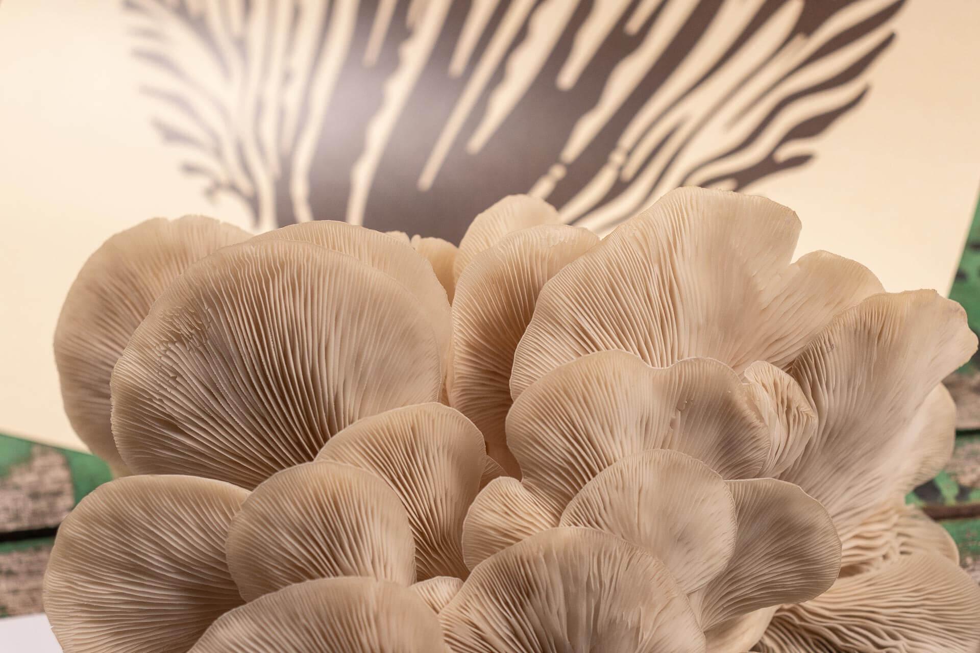 Mushroom Forestry corporate identity logo design branding mushroom eco fast moving consumer goods FMCG foodie packaging Australia Vibranding