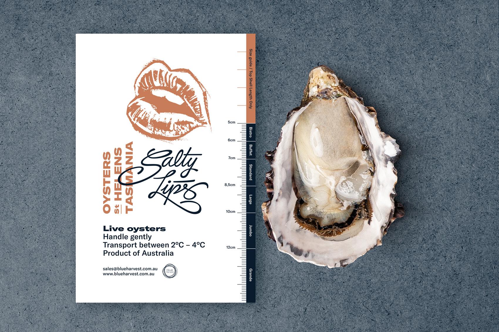 Branding Salty Lips folleto papelería Vibranding diseño fotografía